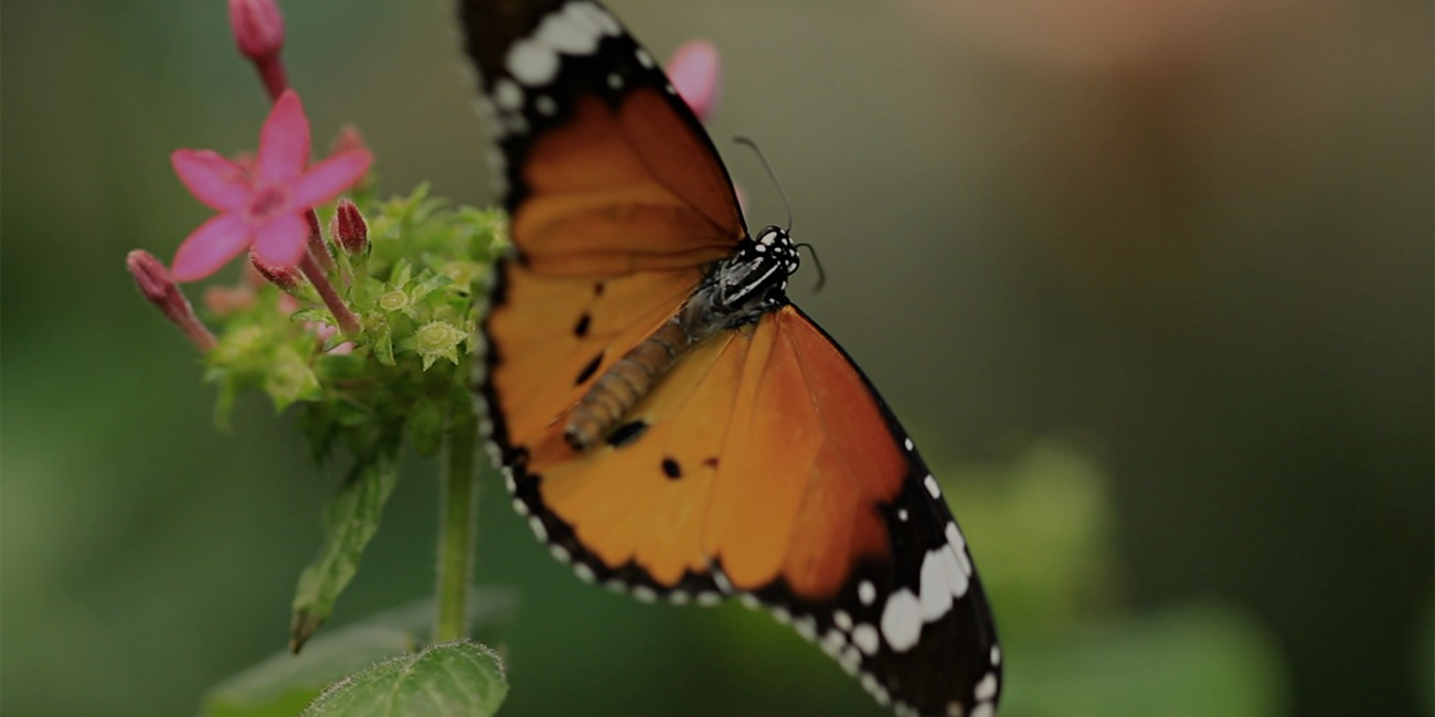 How to Start a Butterly Garden in Your Backyard