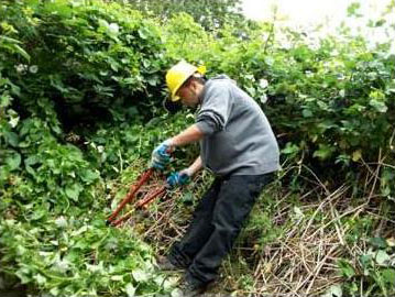 SCA Member Parker Davis hard at work clearing brush on his Summer 2010 Crew