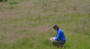 SCA Intern Ariel Lepito identifying an endangered Wild Lupine