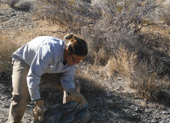 Here is Natalie rolling rocks to the incursion for some erosion control!