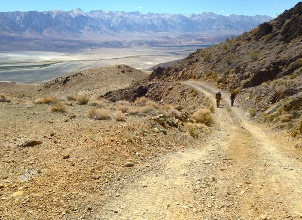 Hiking around the Inyo Mountain Wilderness looking for incursions to restore! The Owens Valley and Sierra Nevada sure did look beautiful from our work sites that day.