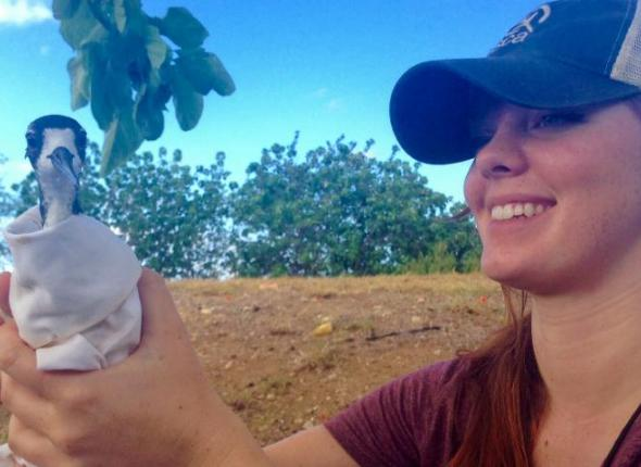 Rachel holding an endangered Hawaiian Stilt that she assisted with capturing, banding, and fitting with a tracking device.