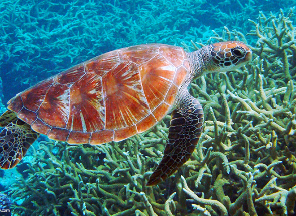 Protect oceans and marine life by reducing plastic waste and using reef safe sunblock.