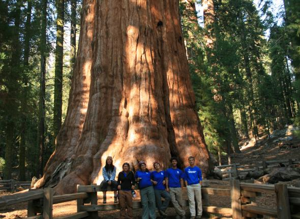 the Jawbone crew with the LARGEST LIVING TREE ON THE PLANET!