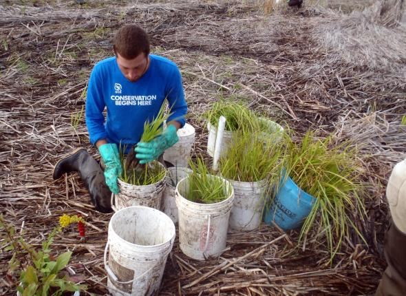 Mason preping some plants for installation in Cowles Bog