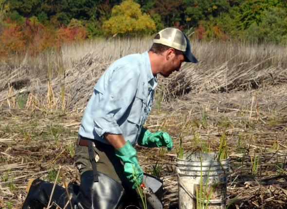 Mason installing Native Plants in Cowles Bog