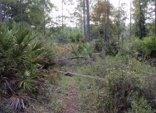 Port Leon Wilderness Before
