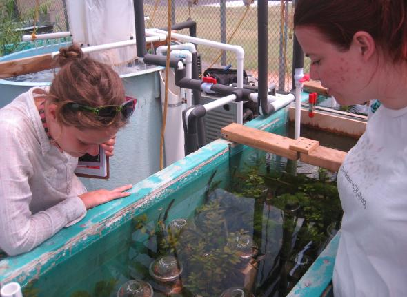 Allison and Kim in the aquatic greenhouse at the USFW Aquatic Resource Center