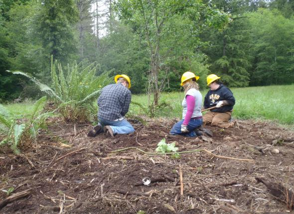 Native Plant Corps work day