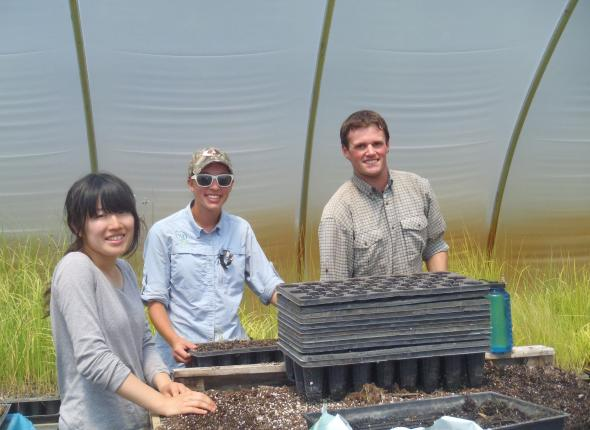 Emi, Samantha, & Eric doing some transplanting in the greenhouse