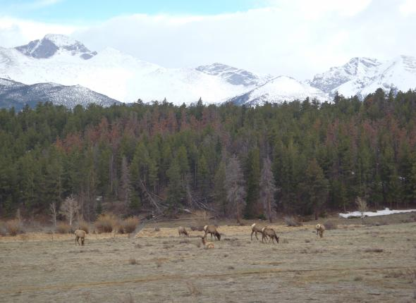 Wildlife SCA VFC 2 2013 - Rocky Mountain NP Elk
