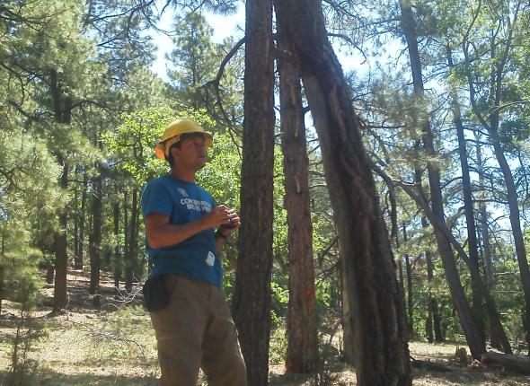 Eric measures tree height.