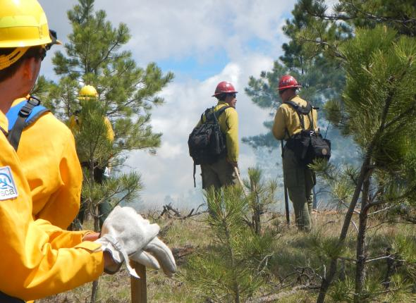 Live prescribed burn field training exercise