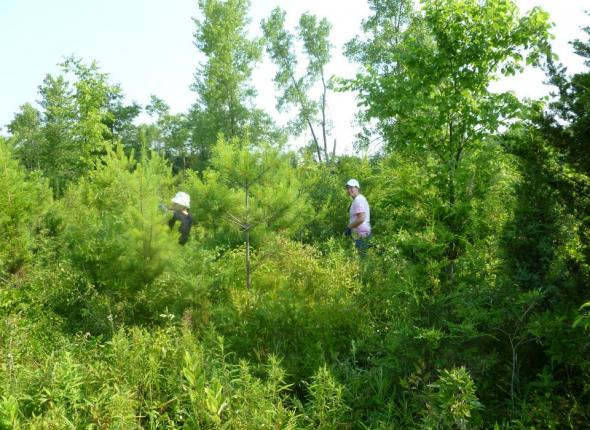 Kayla and Jenna preventing a future Buckthorn forest