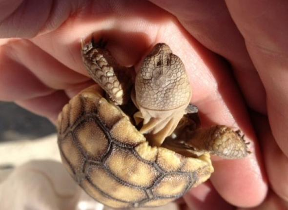 At Baby Tortiose made an appearance at an Outreach Day