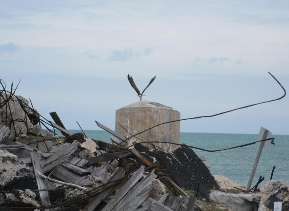 An osprey leaves ruined fort at Egmont Key NWR