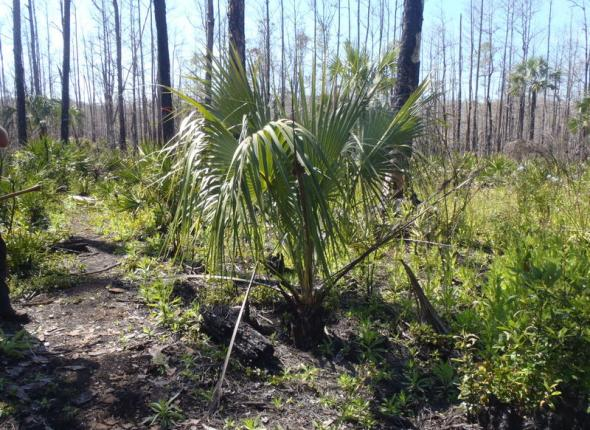 Palmetto series photo 1
