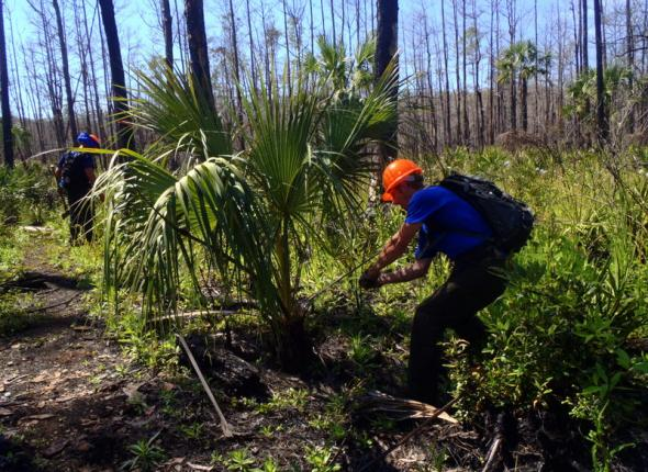 Palmetto series photo 2