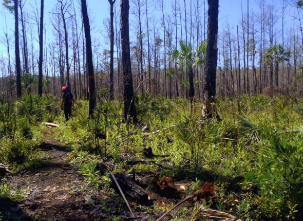 Palmetto series photo 3...palmetto gone!