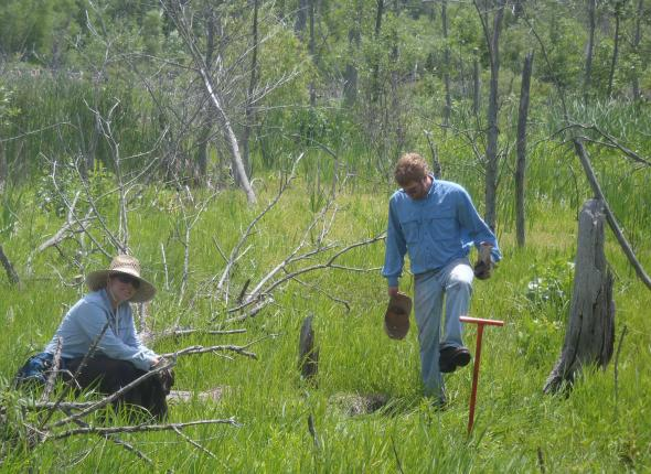 Kristina and Patrick planting in the Great Marsh