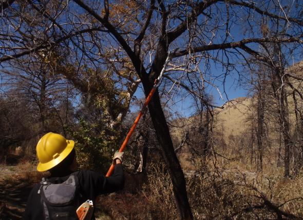 Trail maintenance with Field School at Chiricahua