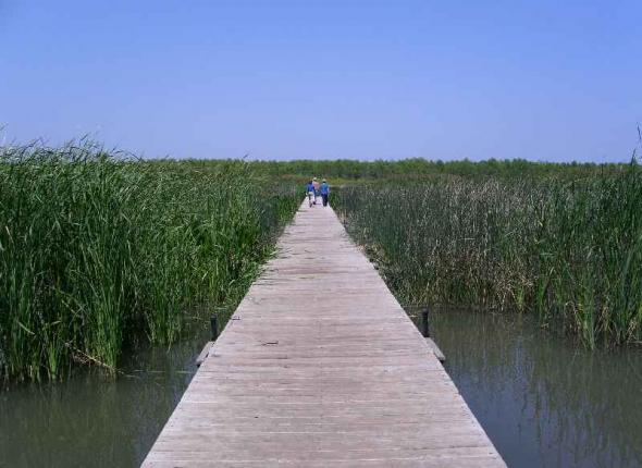 Platforms at Waco Wetlands