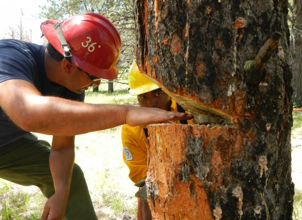 Black Hills National Forest employee examines and critiques Davon's face-cut during S-212 Chain Saw training.