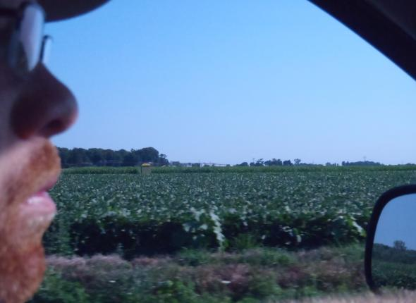 Endless crops in the Indiana countryside