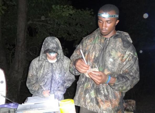 Weighing a captured bat