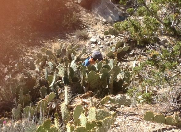 Private Richter taking cover behind abundant amounts of cactus