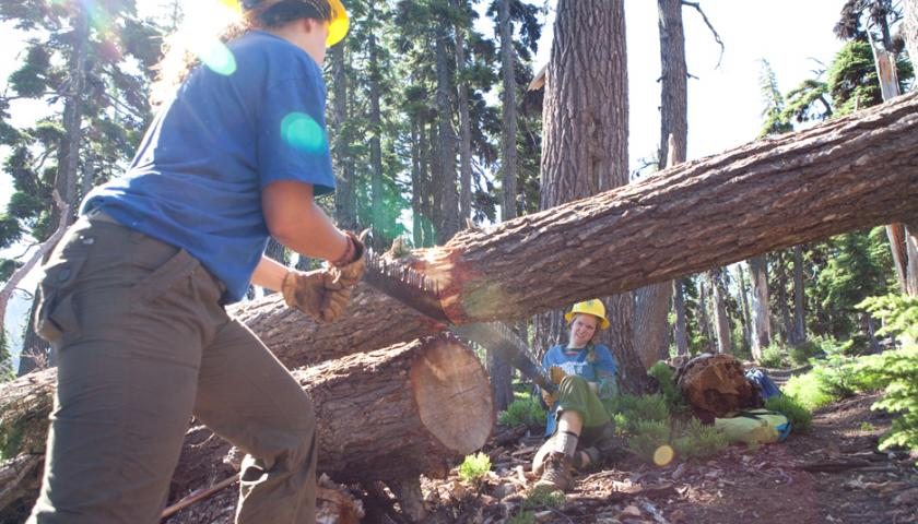 Crew members using cross cut saw to cut fallen log.