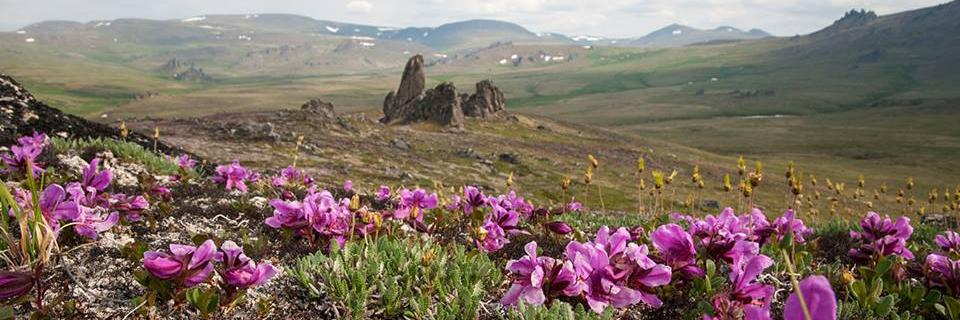 Flowers blooming in Alaska where SCA is busy working