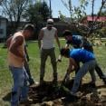 RTOC gets its hands dirty planting trees in Fredericktown