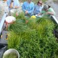 Loading plants up for installation in the Great Marsh