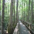 Conservation day: Sardis hike. Brendan on the boardwalk surrounded by a cypress forest.