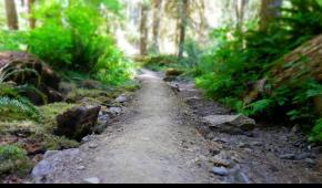 Trail in Olympic National Park, photo by SCA crew 2014